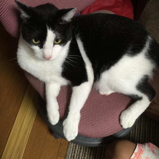 Yvonne's profile|Housekeeping Matching Platform TASKAJI -from 1500 yen/hour