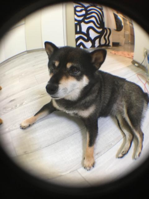 クルミ's profile|Housekeeping Matching Platform TASKAJI -from 1500 yen/hour